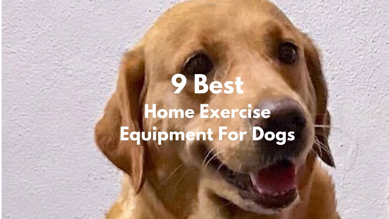 9 Best Home Exercise Equipment For Dogs Featured Image