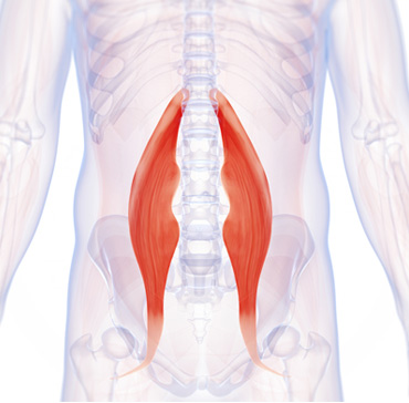 Position of hip-flexor-muscle