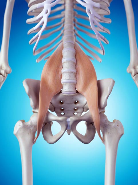 Location of Psoas muscles